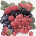 Tuti Frutti Decor Multi Frutti