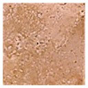 Optima Bottone Marmo Scabos