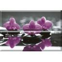 Aure Composicion Wellness 01 Purple