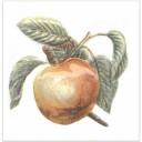 TFA009 Декор Оранжерея
