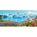 Alps P6D246