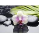 Декор Азалия Орхидея 2