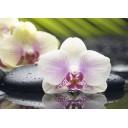 Декор Азалия Орхидея 1