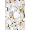 Плитка настенная Энигма 3 тип 1 крупный цветок 27,5х40
